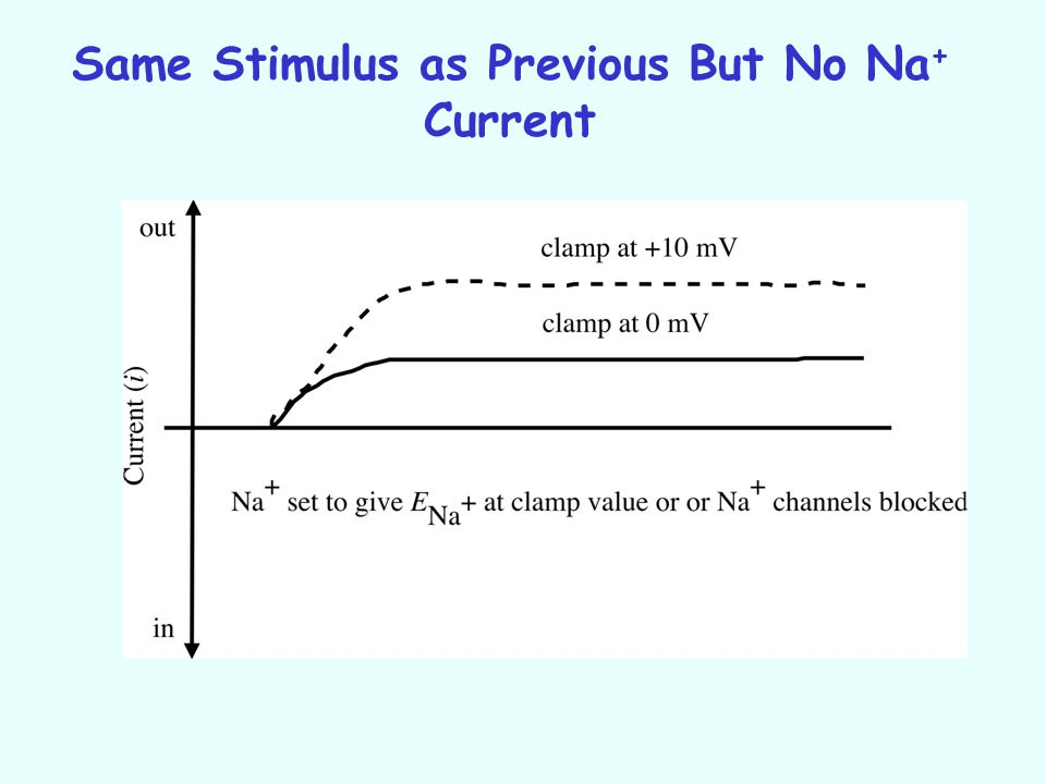 Same Stimulus as Previous But No Na+ Current