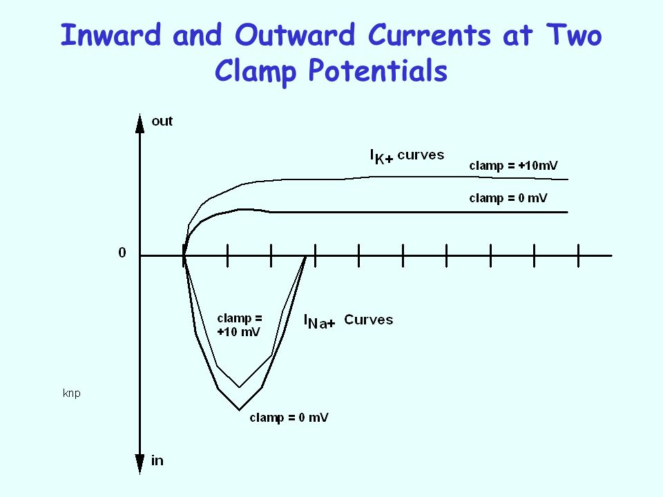 Inward and Outward Currents at Two Clamp Potentials
