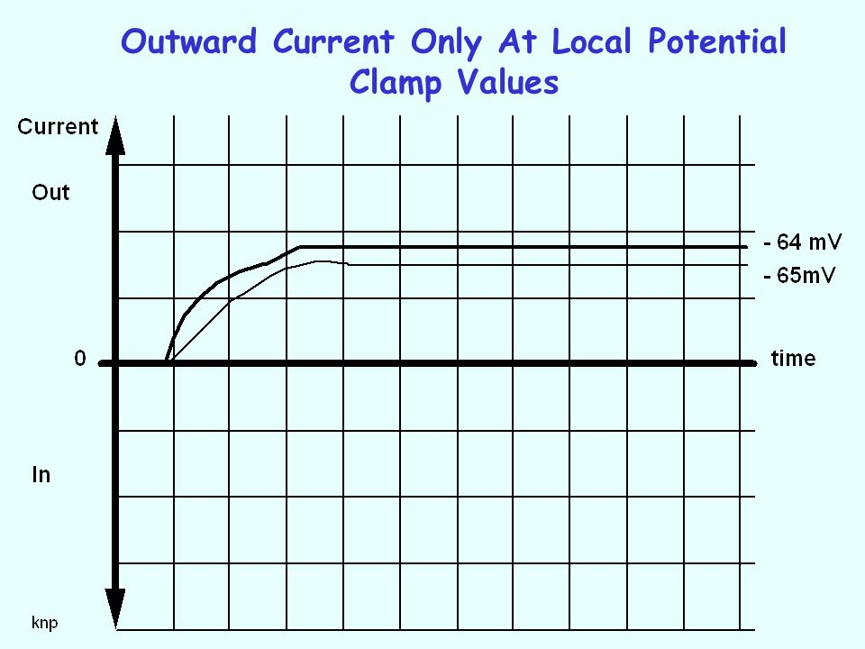 Outward Current Only At Local Potential Clamp Values
