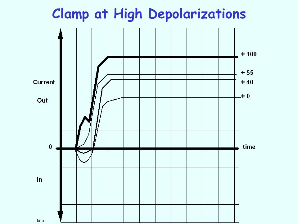 Clamp at High Depolarizations