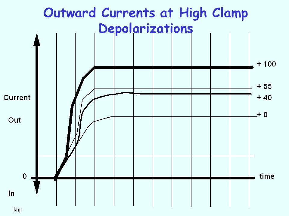 Outward Currents at High Clamp Depolarizations