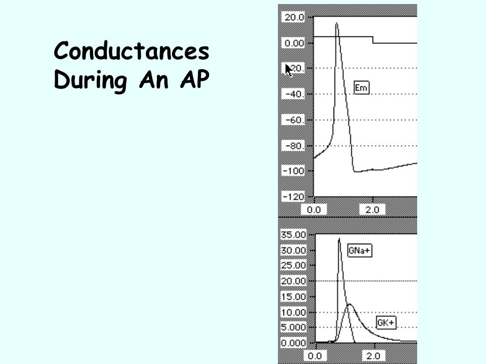 Conductances During An AP