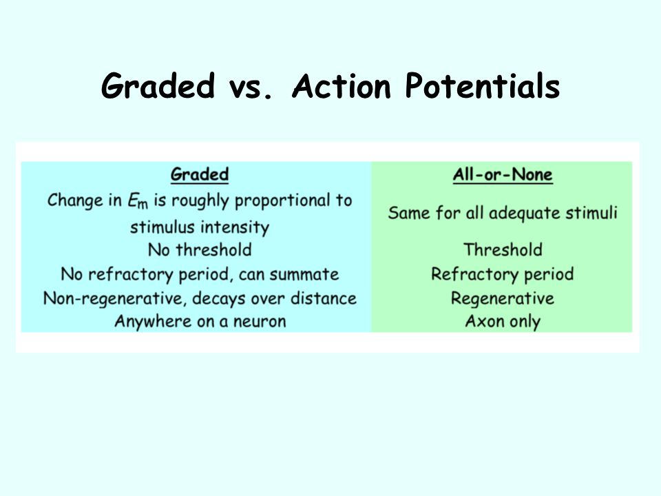 Graded vs. Action Potentials
