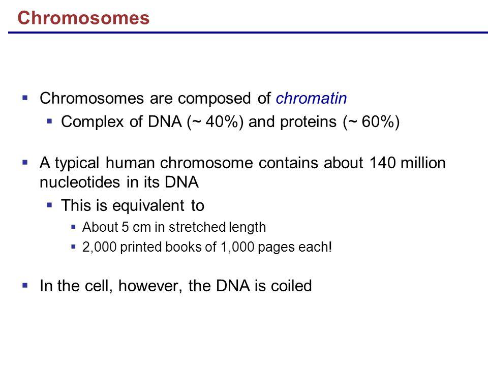 Chromosomes Chromosomes are composed of chromatin