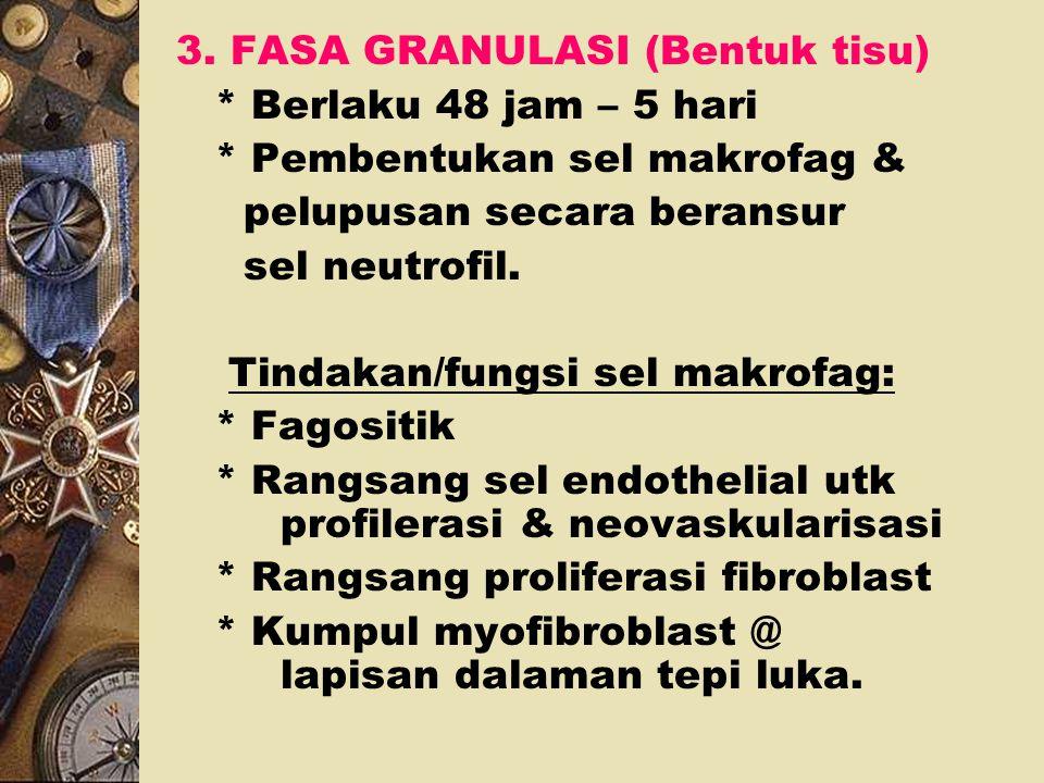 3. FASA GRANULASI (Bentuk tisu)
