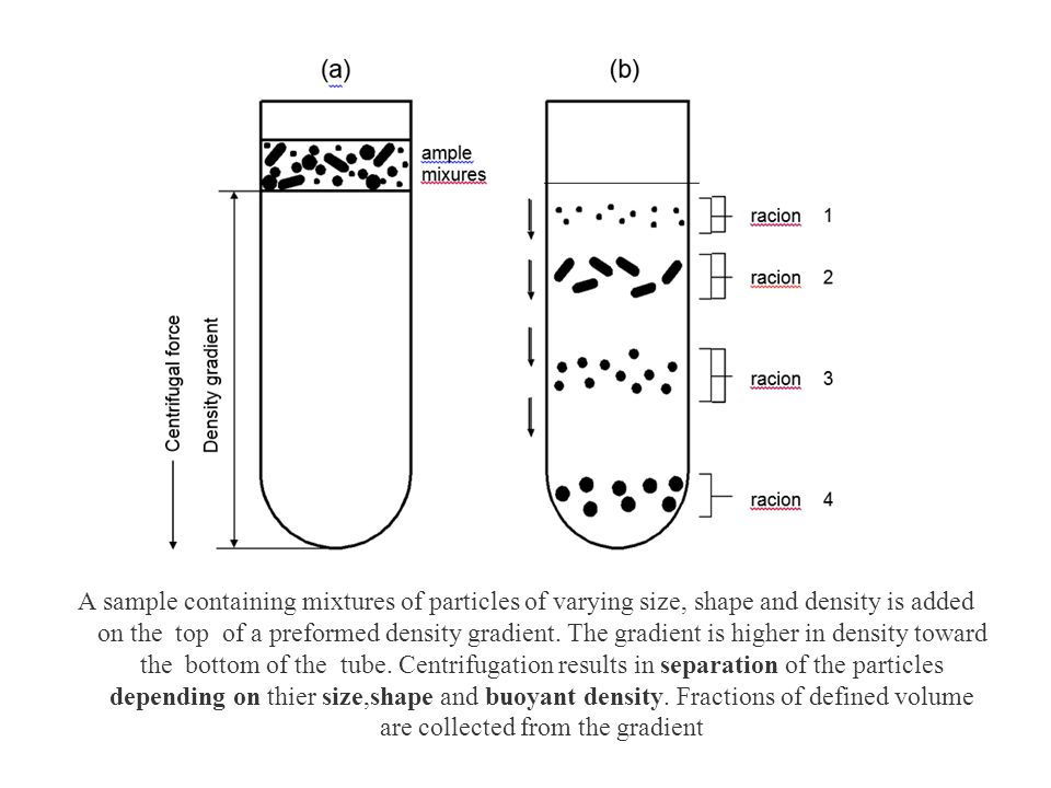 A sample containing mixtures of particles of varying size, shape and density is added on the top of a preformed density gradient.