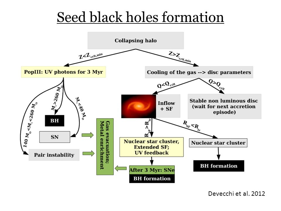 Seed black holes formation
