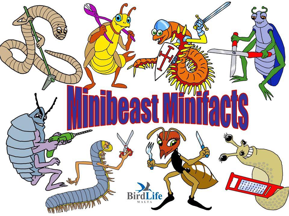 Minibeast Minifacts