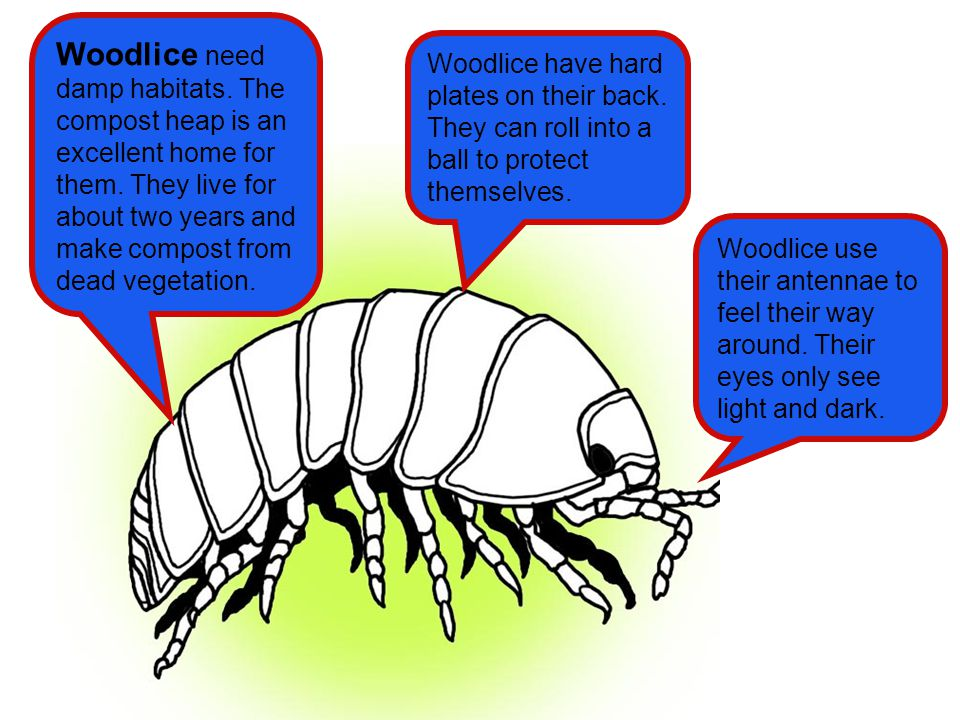 Woodlice need damp habitats
