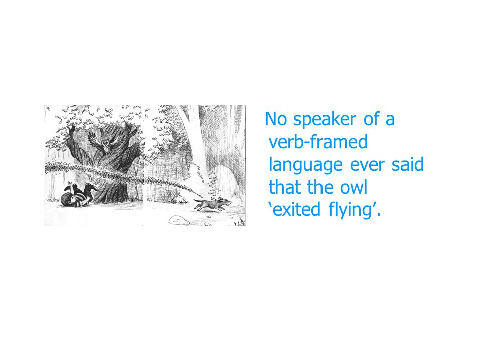 No speaker of a verb-framed language ever said that the owl 'exited flying'.