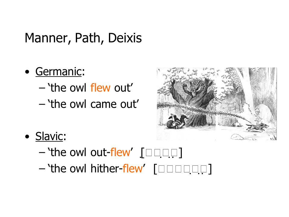 Manner, Path, Deixis Germanic: 'the owl flew out' 'the owl came out'