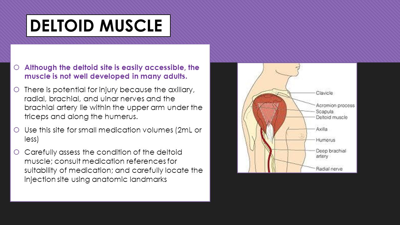 DELTOID MUSCLE Although the deltoid site is easily accessible, the muscle is not well developed in many adults.