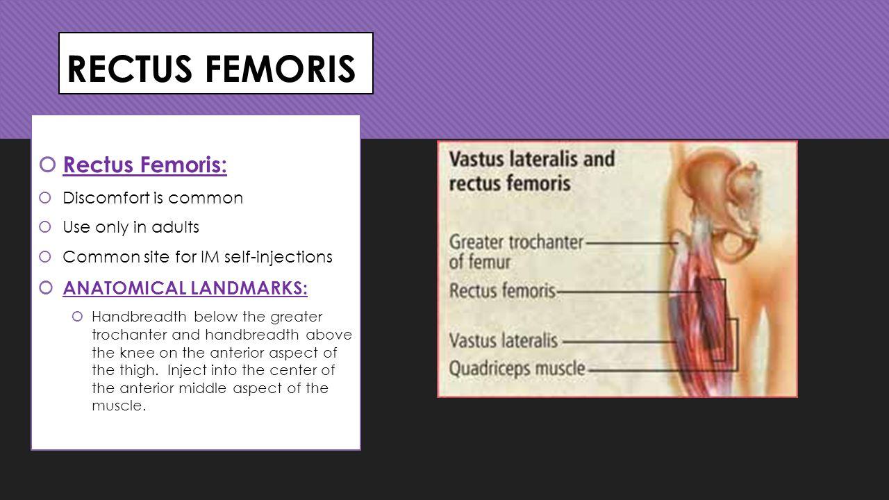 RECTUS FEMORIS Rectus Femoris: ANATOMICAL LANDMARKS: