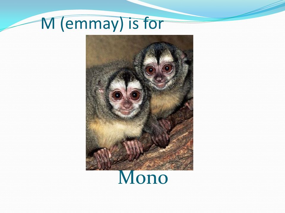 M (emmay) is for Mono