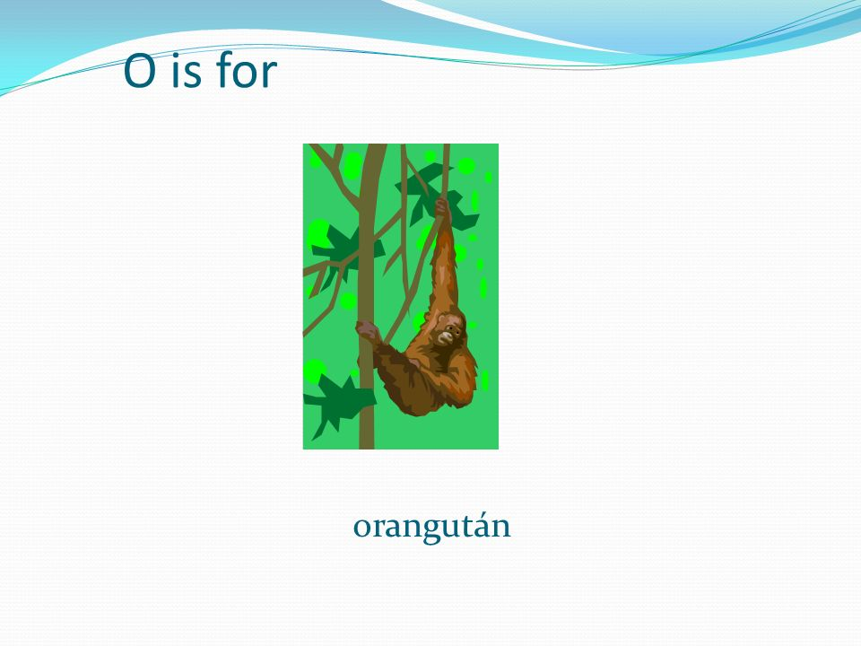 O is for orangután