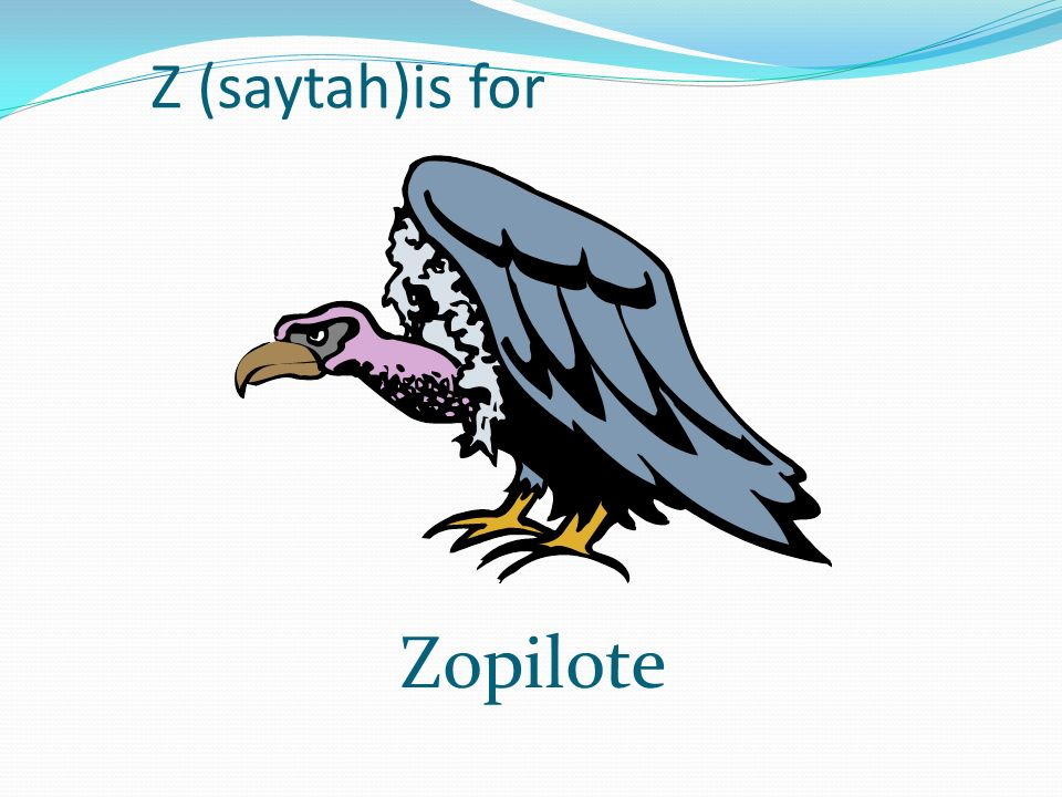 Z (saytah)is for Zopilote