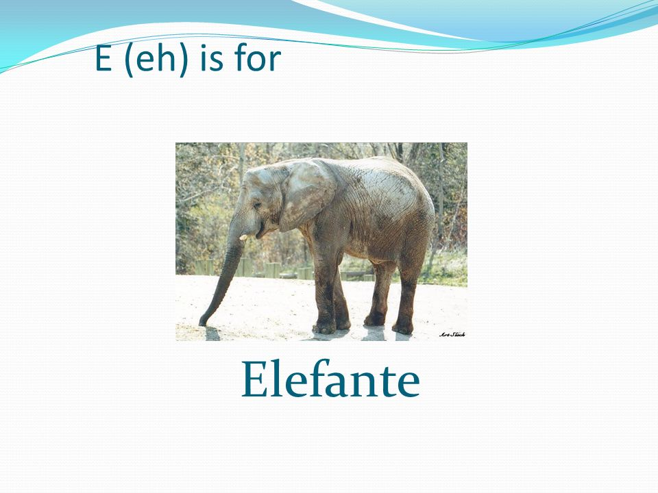 E (eh) is for Elefante