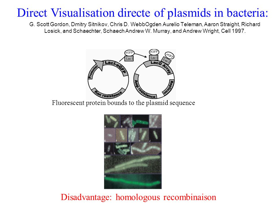 Direct Visualisation directe of plasmids in bacteria: