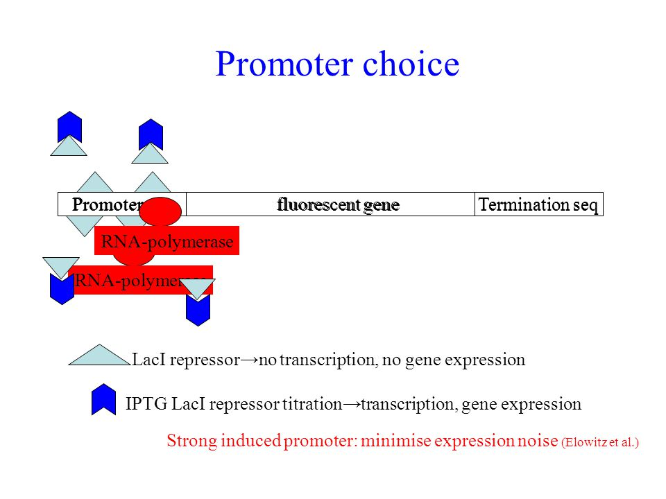 Promoter choice Promoter tac fluorescent gene Termination seq Promoter