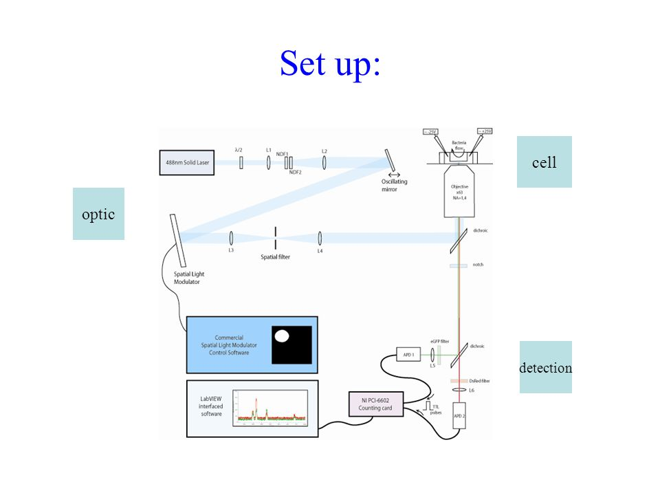 Set up: cell optic detection