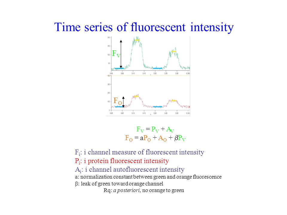 Time series of fluorescent intensity