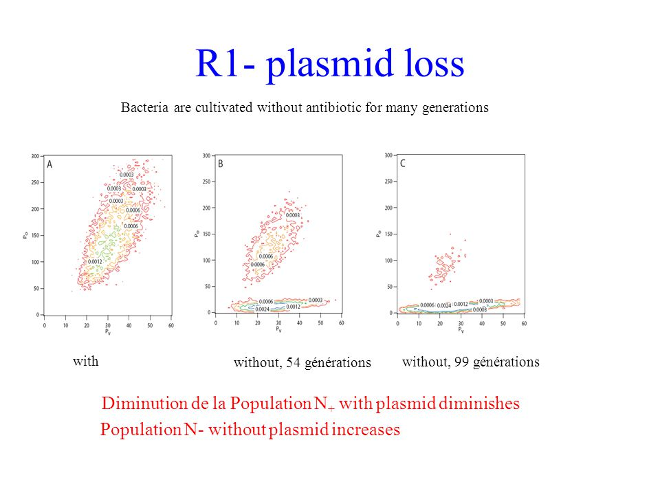 R1- plasmid loss Bacteria are cultivated without antibiotic for many generations. with. without, 54 générations.