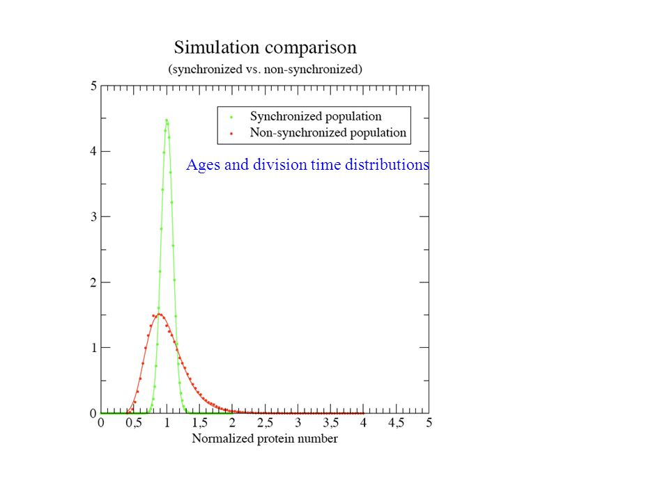 Ages and division time distributions