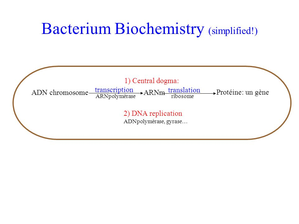 Bacterium Biochemistry (simplified!)