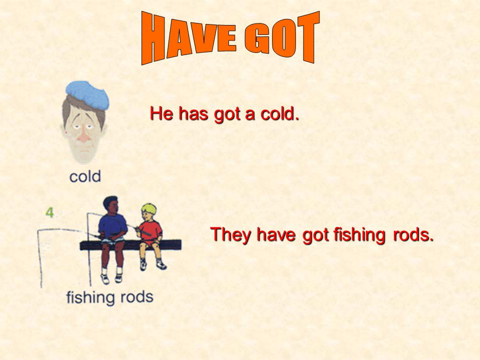 HAVE GOT He has got a cold. They have got fishing rods.