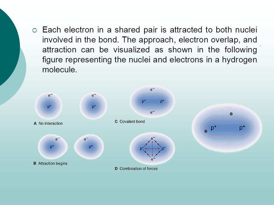 Each electron in a shared pair is attracted to both nuclei involved in the bond. The approach, electron overlap, and attraction can be visualized as shown in the following figure representing the nuclei and electrons in a hydrogen molecule.