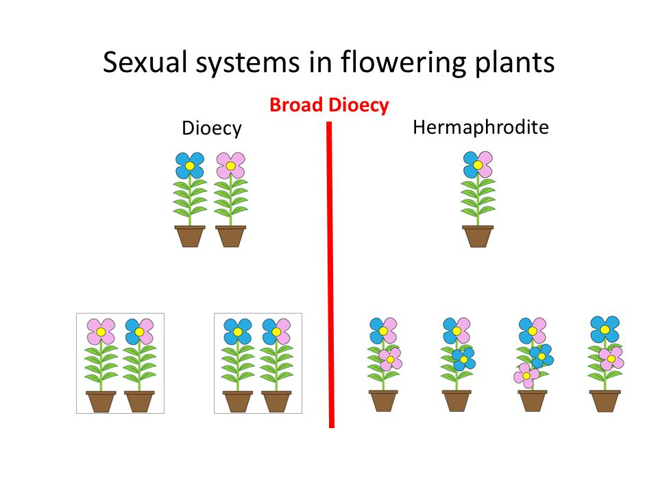 Sexual systems in flowering plants