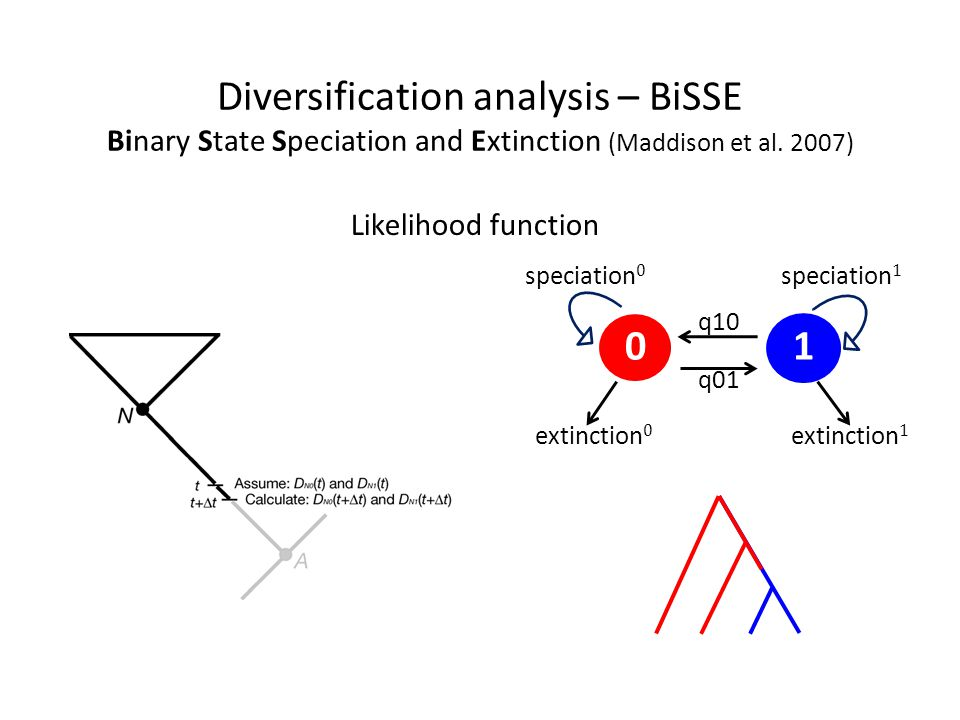Diversification analysis – BiSSE Binary State Speciation and Extinction (Maddison et al. 2007)