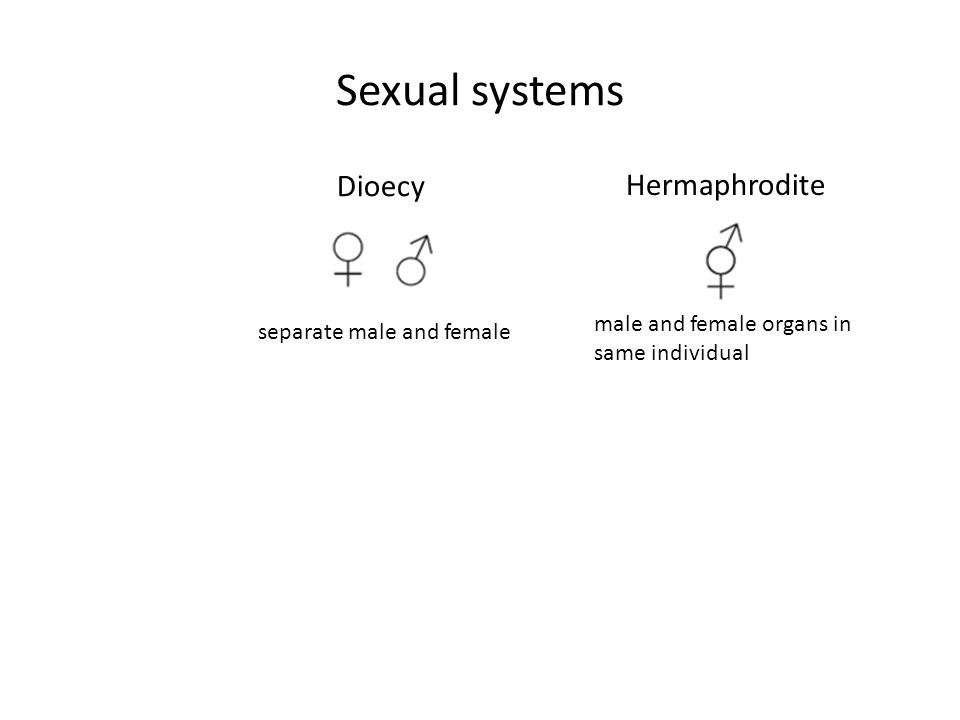 Sexual systems Dioecy Hermaphrodite