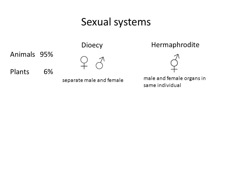 Sexual systems Dioecy Hermaphrodite Animals 95% Plants 6%