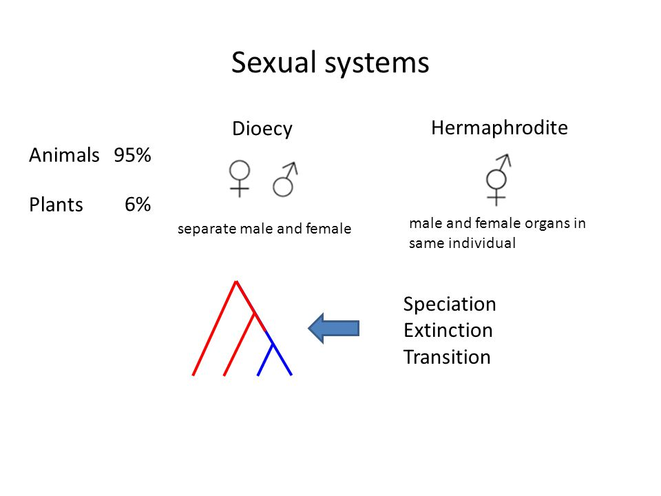 Sexual systems Dioecy Hermaphrodite Animals 95% Plants 6% Speciation