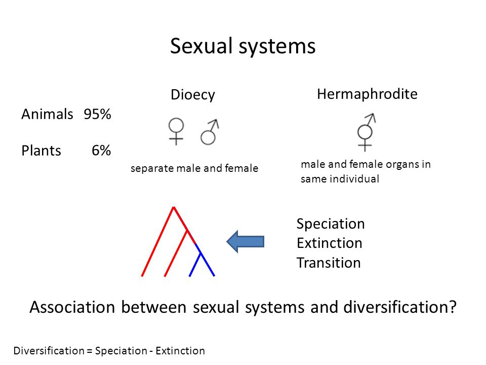 Association between sexual systems and diversification