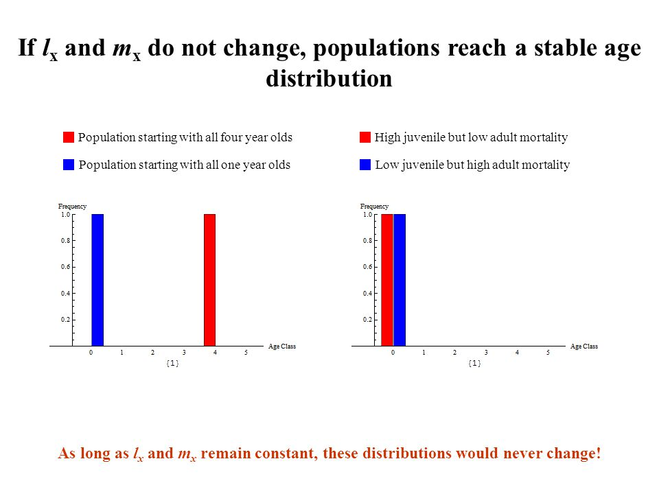 If lx and mx do not change, populations reach a stable age distribution