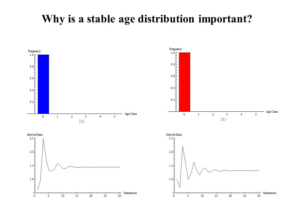 Why is a stable age distribution important
