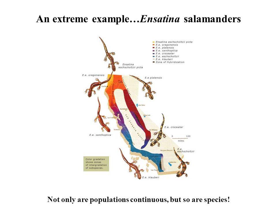 An extreme example…Ensatina salamanders