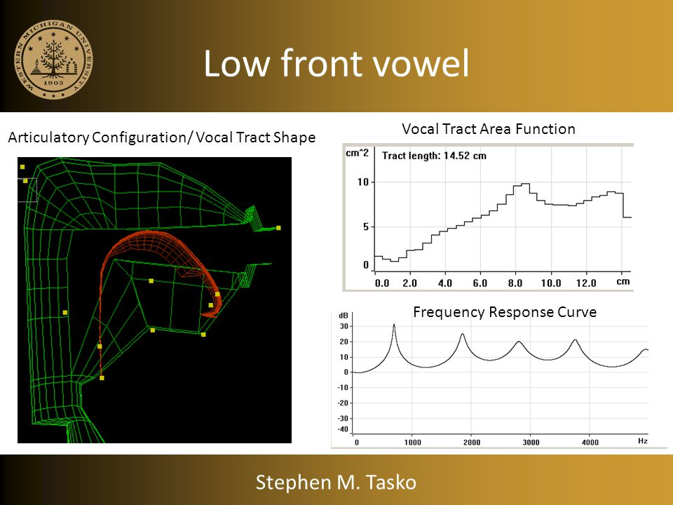 Low front vowel Stephen M. Tasko Vocal Tract Area Function