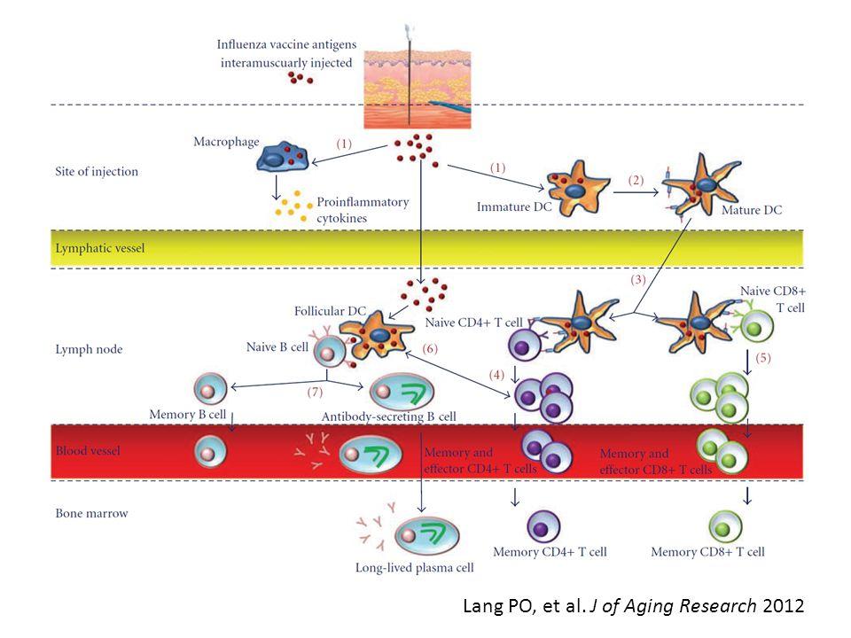 Lang PO, et al. J of Aging Research 2012
