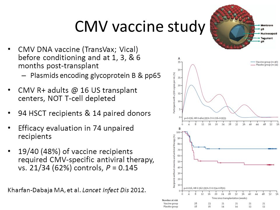 CMV vaccine study CMV DNA vaccine (TransVax; Vical) before conditioning and at 1, 3, & 6 months post-transplant.