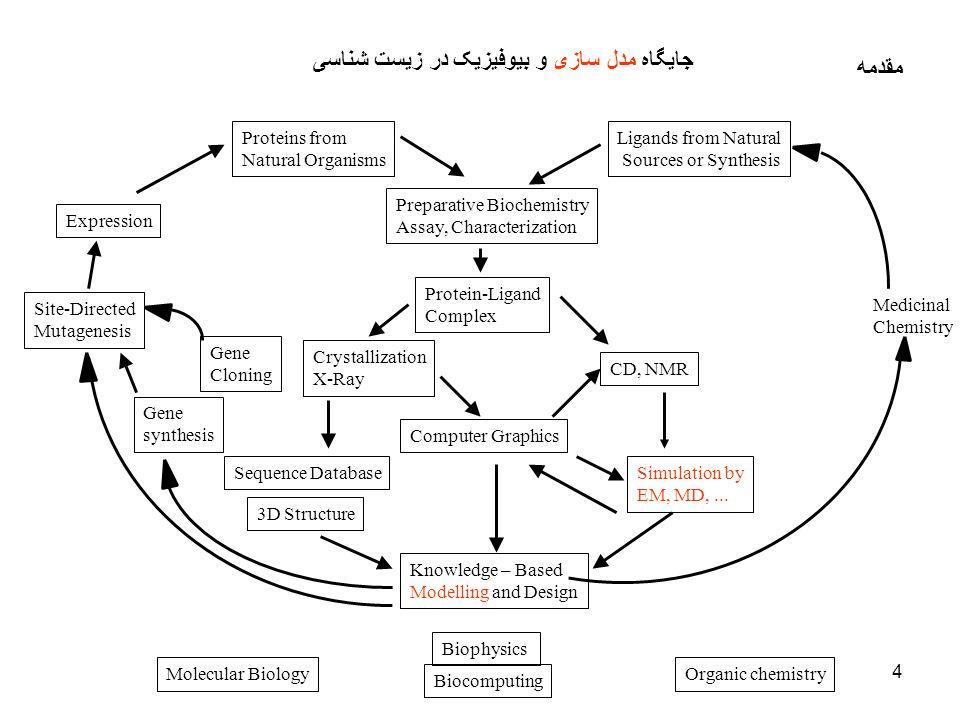 جايگاه مدل سازی و بيوفيزيک در زيست شناسی مقدمه