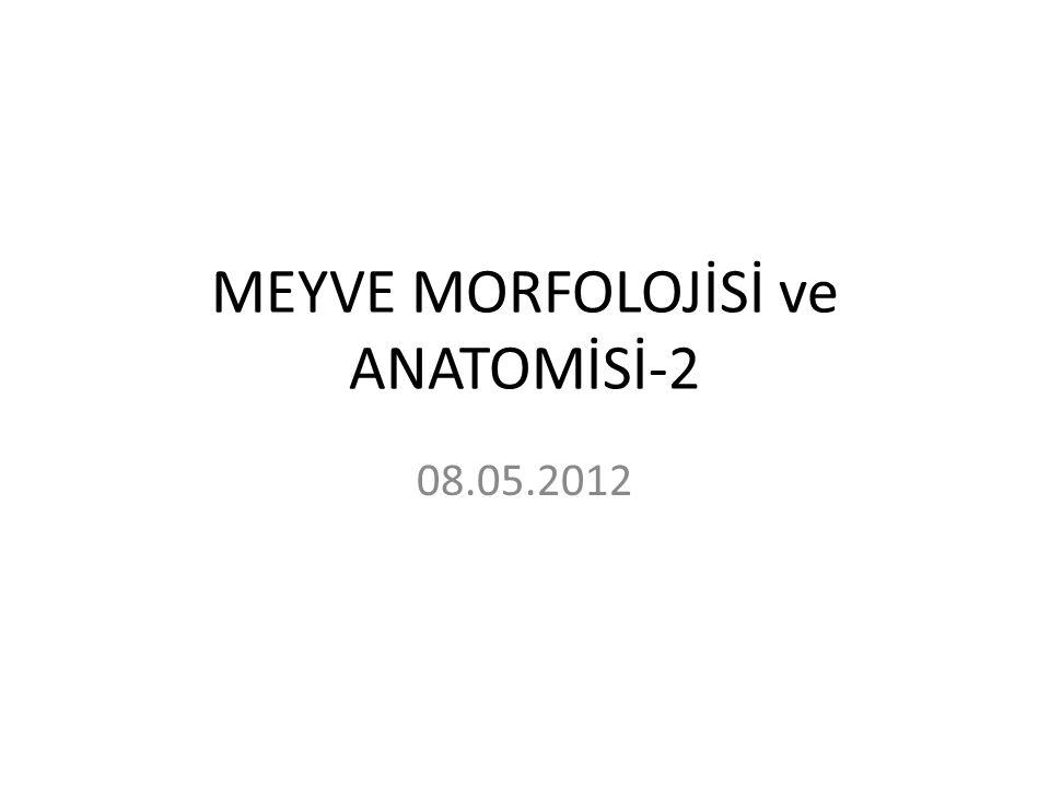 MEYVE MORFOLOJİSİ ve ANATOMİSİ-2