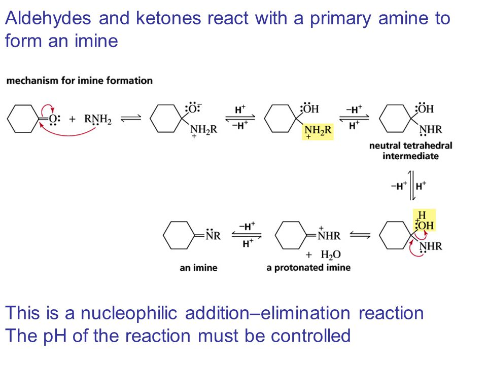 Aldehydes and ketones react with a primary amine to