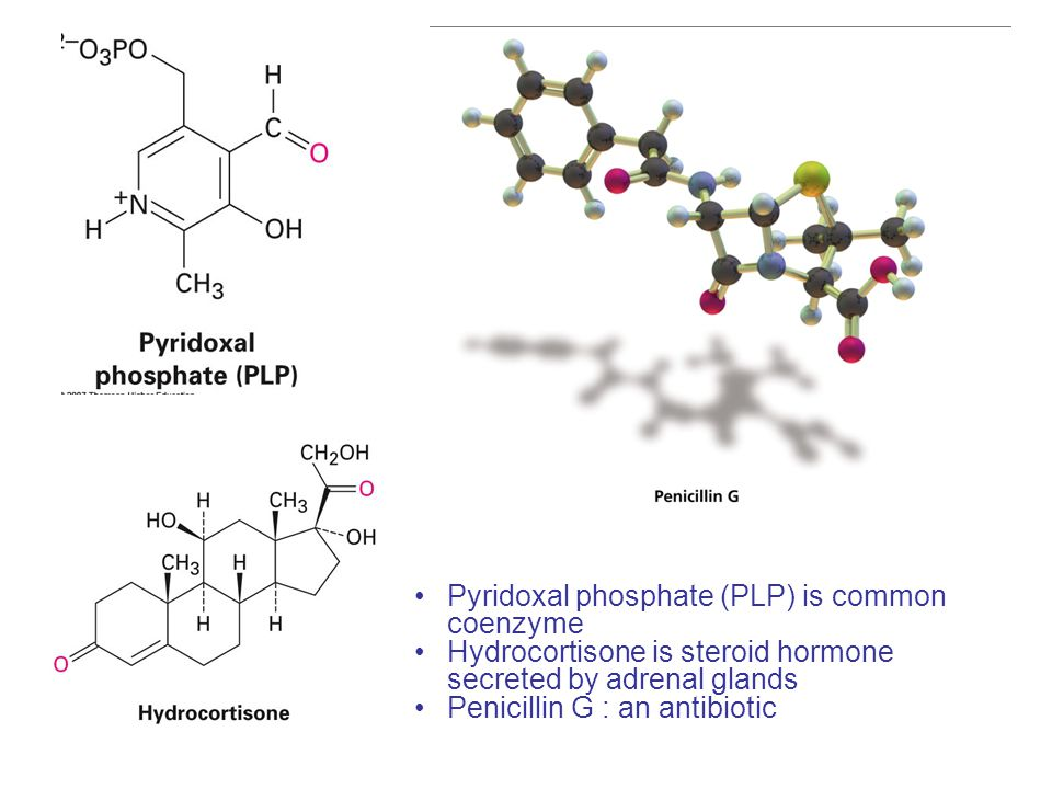 Pyridoxal phosphate (PLP) is common coenzyme