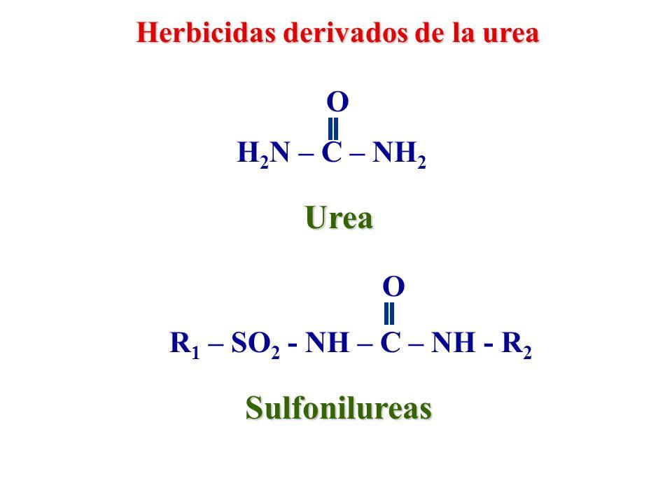 Urea Sulfonilureas Herbicidas derivados de la urea O H2N – C – NH2 O