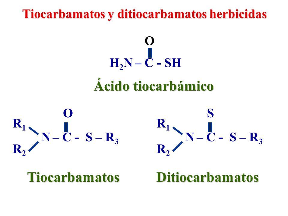 Ácido tiocarbámico Tiocarbamatos Ditiocarbamatos