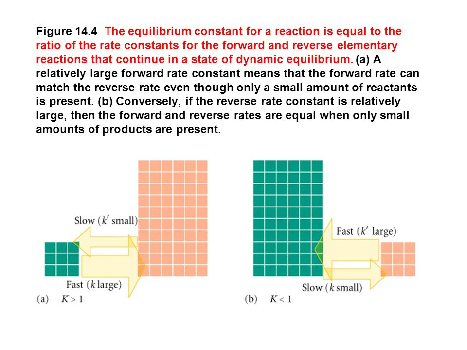 Figure 14.4 The equilibrium constant for a reaction is equal to the ratio of the rate constants for the forward and reverse elementary reactions that continue in a state of dynamic equilibrium.