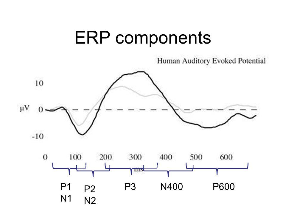 ERP components P1 N1 P3 N400 P600 P2 N2